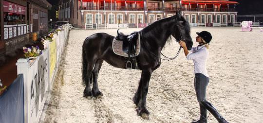 аренда клубной лошади в equides club
